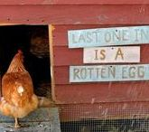 Backyard Chickens / Our experience of raising backyard chickens - and other wonderful chicken ideas from around the web