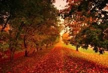 Fall/Thanksgiving / by Kay Reagan