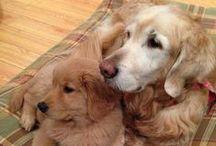 Doggies <3 / by Gabriela Langley<3