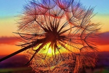 Sun/Ra/Sol / by Linda Jewell
