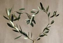 Beautiful Olive Trees & Branches / by Pompeian Inc