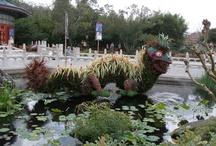 EPCOT Flower/Garden / by Denise Pilat-Curatolo
