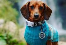 Online Pet Stores / Discover amazing pet finds from these independent online stores.