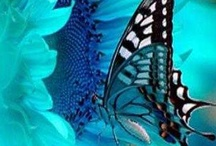 Butterflies / by Connie Gray