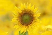 Yummy Yellows / by Connie Gray