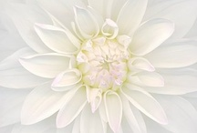 Wonderful Whites / by Connie Gray