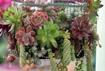 For Green Thumbs / Gardens, gardening, container gardens, herbs, cactus, succulents  / by Sarah Consorti