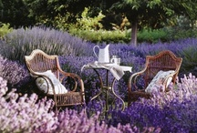 A touch of Lavender
