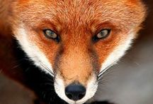 Photography: Beautiful Creatures