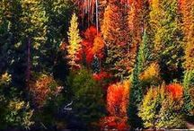 Fall Fall Fall !!!!! My favorite / by Marsha Lakes