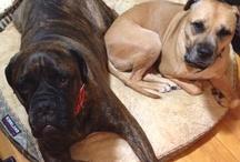 The Pups I Love