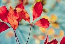 Autumn: second spring