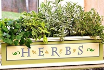 Herb Gardens / by Katherine Vickers