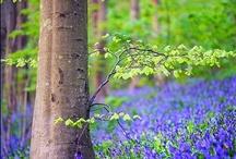 Springtime all over the world