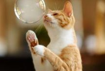 Cats, kittens........ / by Karen Lange
