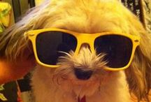Paws stole my shades