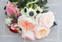 Florals / Pretty flowers and plants / by House of Hipsters - Home Decor, Interior Design, and Styling Expert with Vintage Flea Market Finds