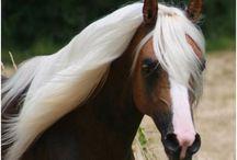 Horses / by Sunday Kraushaar
