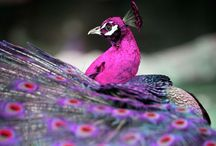 Birds of a Feather / by Sunday Kraushaar