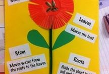 Teaching about Plants