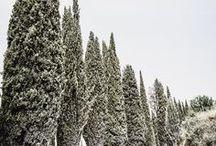 Tuscany/Siena