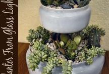 Plants / by Vicki Rasmussen