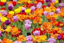 Gardens/Landscaping/Flowers / by Lynn Dee Ballow