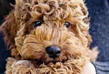 Cute Animals <3 / Awesome pictures of #puppies, #babies #baby animal and all cute animal stuff we found on Pinterest :) / by Styling UP