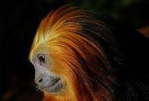 Endangered / endangered animals
