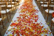 Autumn Weddings / Love the colours of autumn weddings.  Oranges, browns, golds and greens.  Make use of the lovely light dappled through the trees too, just gorgeous.