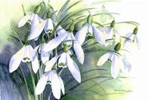 Watercolour - white and green flowers