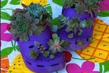 Gardening / by Deborah Pellegrino