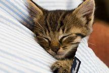 Brighten Your Day: Cute Animals