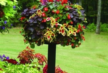 Garden ideas / by Morning Glory