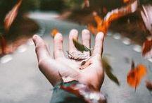 Autumn / by Olympus