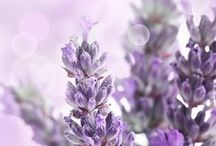 Lavender and Lilac / All things Lavender and Lilac - subtle and beautiful :)