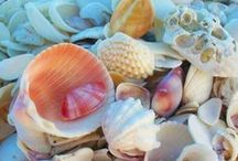 Elegant Shells / I adore shells, they're absolutely beautiful! Such a variety of colour, texture and shape - so elegant :)