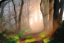 Woodland Magic / Majestic and wondrous woodlands that fill your soul with light and heavenly peace. Simply divine.