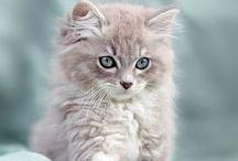 Precious Cats