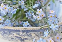 Forget-Me-Nots / A very special, delicate and beautiful flower - one of my favourites. They truly make my heart sing!