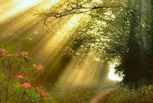 Sunlight Delight