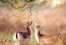 Divine Deers