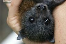 Bats in the belfry / Don't ask me why I think bats are cute. I just do.