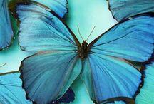 Butterfly's  & Caterpillars