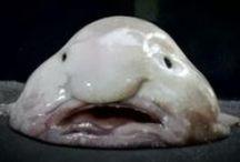 Odd Sea Creatures