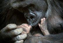 ❤️ ANIMAL LOVE ❤️