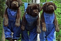 Animals / by Bruce Singbeil