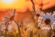 Beautiful Artwork & Photography