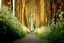 where I NEED To Go / by Mariah Garrett