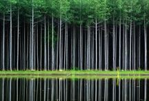 Trees / by Cordelia Fox